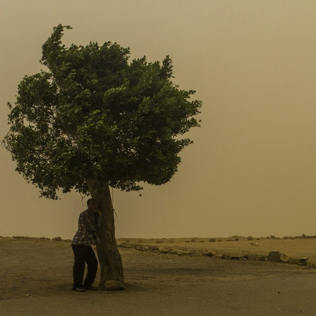 A man takes cover under a tree in Mokkatam as a sandstorm and extreme temperatures grip Cairo. On May 27, 2015 Cairo registered the highest temperatures on Earth, officially a smoldering 46C (114F). It is unusual for Cairo to experience such extreme heat and a sandstorm of such magnitude in late May. Photo by Sima Diab, @sima_diab